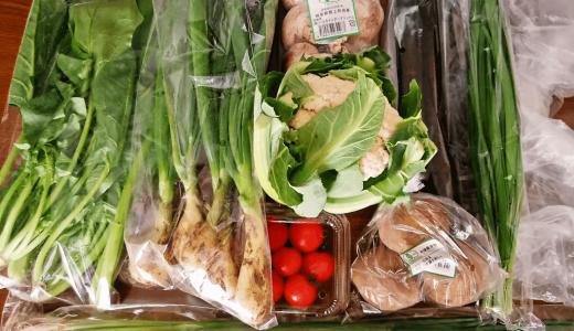ビオ・マルシェのお試しセットの口コミ・感想!実際に届いた野菜を公開!