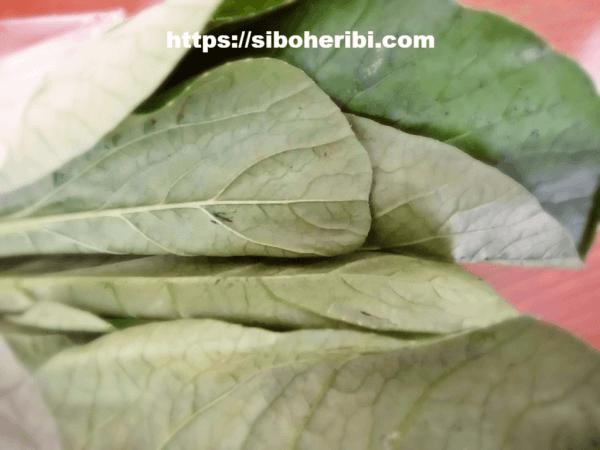 大地を守る会:小松菜の葉部分